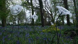 Clear, fsed glass lilies, forged steel stalks situated in bluebell wood